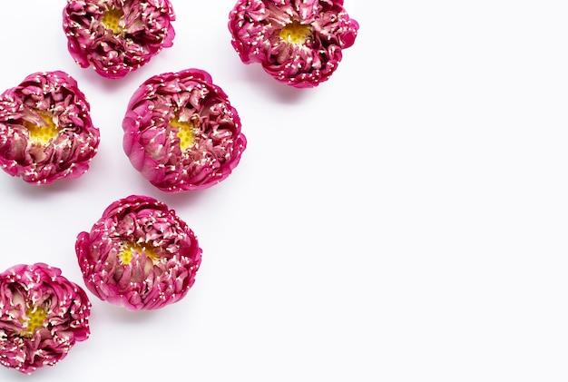 Fiore di loto rosa su sfondo bianco. copia spazio