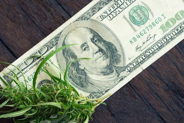 Fiore di marijuana su una banconota da cento dollari
