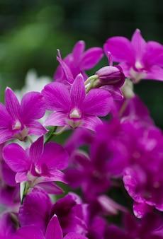 Fiore di orchidea in sfondo nero