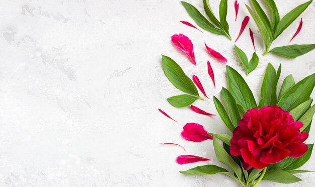 Fiore di peonia magenta bella con foglie