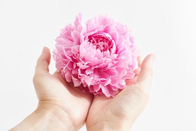 Fiore di peonia rosa fresca in mano della ragazza. copia spazio