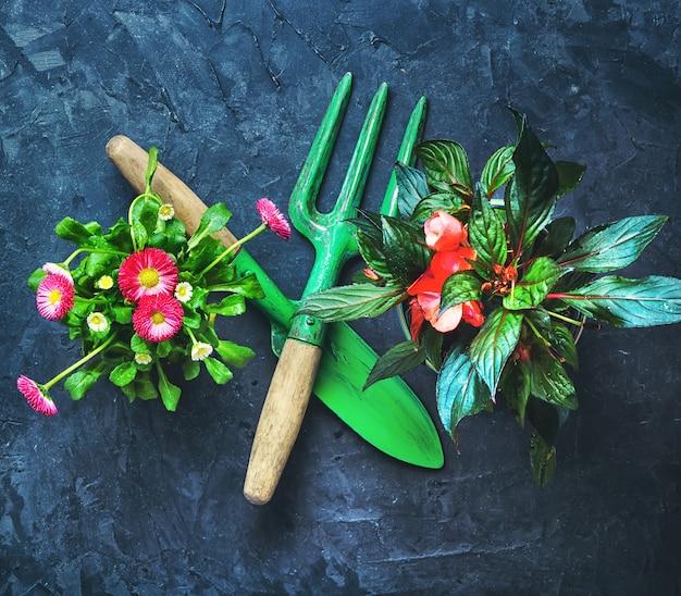 Fiore di primavera e attrezzi da giardino