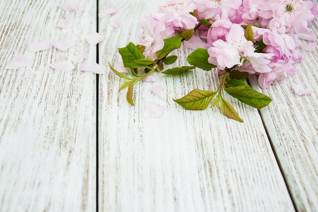 Fiore di primavera sakura