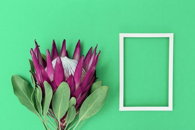 Fiore di protea, grande bella pianta e cornice bianca sulla superficie della carta. composizione minima sfondo per cartolina o invito per compleanno, anniversario, matrimonio. vista dall'alto.