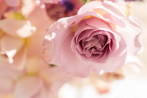 Fiore di rosa rosa fresco delicato a macroistruzione. decorazione di fiori freschi di nozze