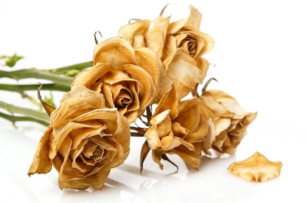 Fiore di rosa secco