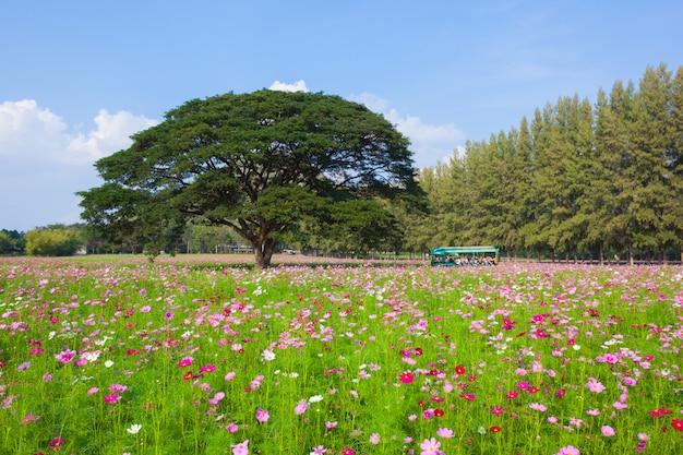Fiore di tulipano in fiore nel campo