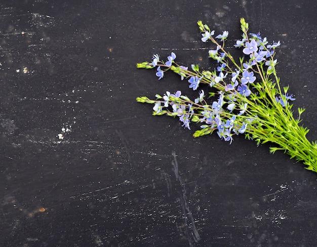 Fiore di veronica officinalis su fondo nero
