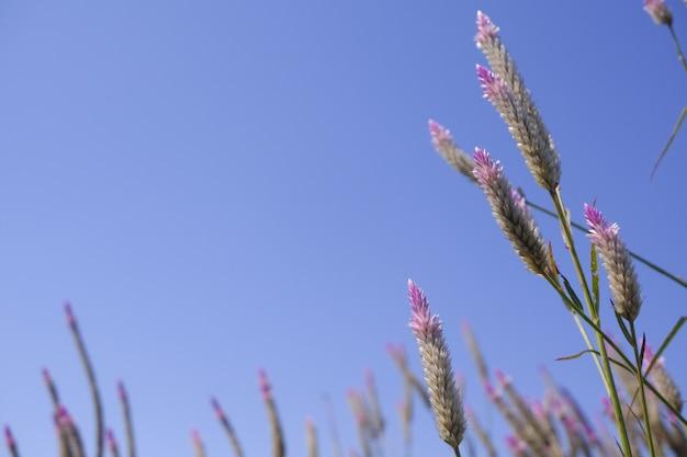 Fiore di vetro in natura contro il cielo blu