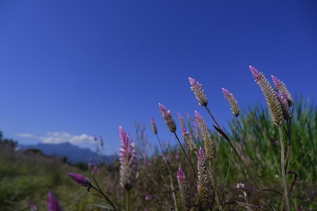 Fiore di vetro in natura contro la priorità bassa del cielo blu
