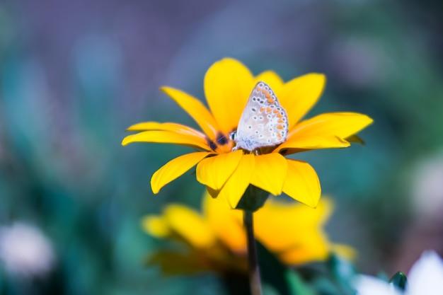 Fiore giallo con una buterfly