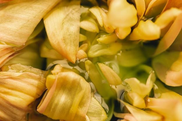 Fiore giallo delicato in primo piano estremo dell'acqua