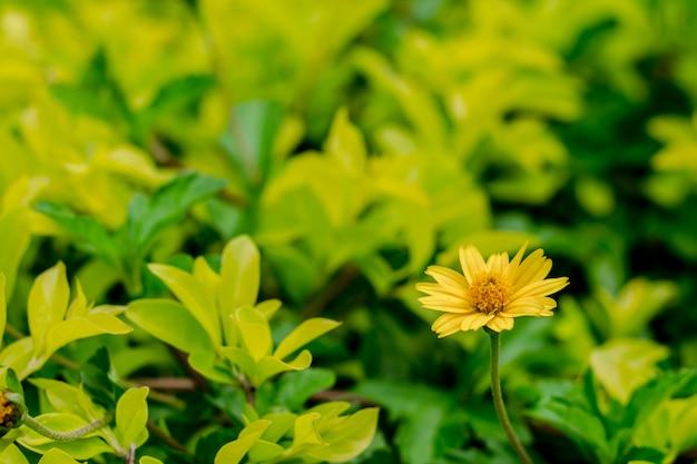 Fiore giallo fresco su fondo verde