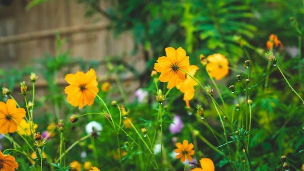 Fiore giallo in giardino