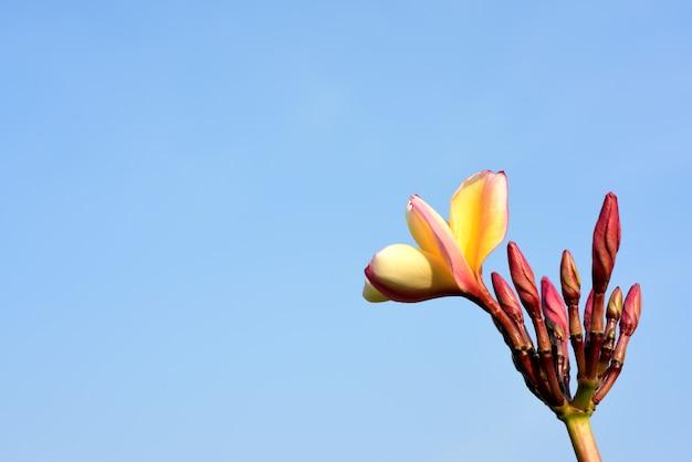 Fiore giallo o fiore bianco.