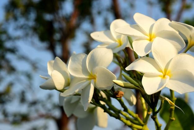Fiore in fiore e foglia verde con cielo luminoso.