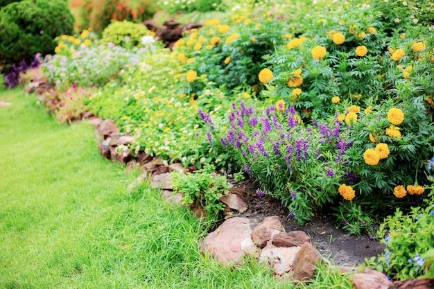 Fiore in giardino al sorgere del sole.