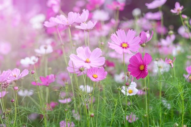 Fiore in vista naturale