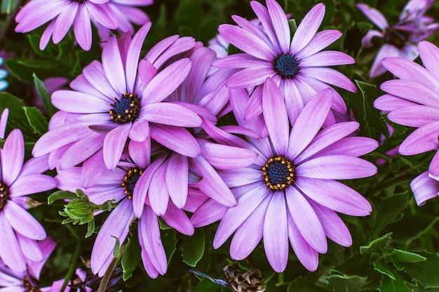 Fiore margherita gerbera. concetto del partito di estate delle donne di aria aperta