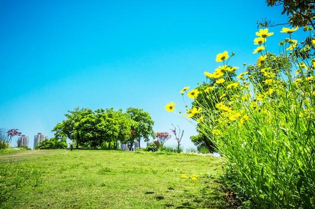 Fiore nel parco