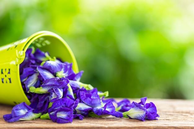 Fiore porpora fresco del pisello di farfalla sul fondo di legno della tavola