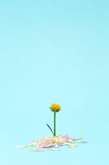 Fiore rosa su uno sfondo minimo colorato. sfondo floreale creativo. copia spazio