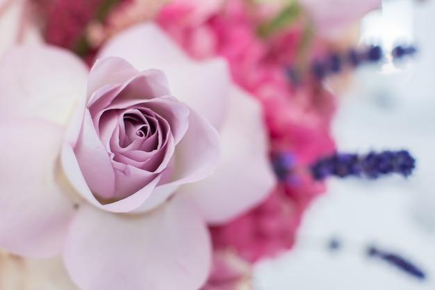 Fiore rosa viola fresco a macroistruzione delicato.