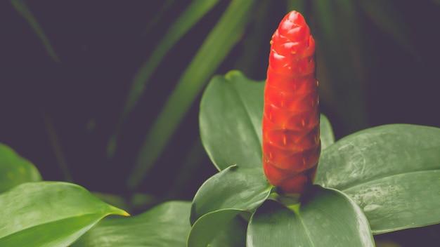 Fiore rosso con il fondo della natura della molla delle foglie verdi