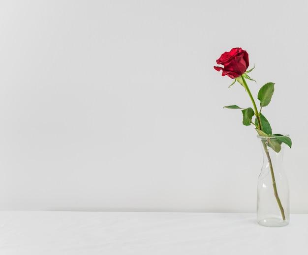 Fiore rosso fresco in vaso a bordo