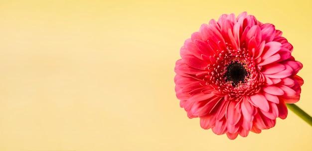 Fiore rosso su giallo