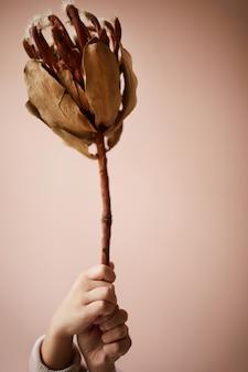Fiore secco esotico