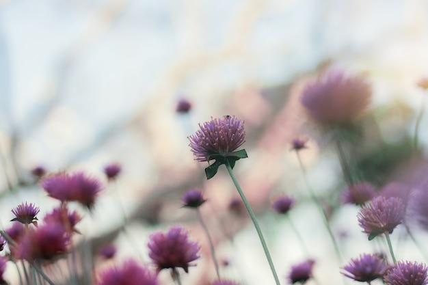 Fiore viola al cielo.