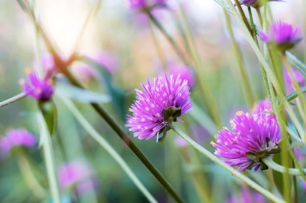 Fiore viola alla luce del sole.