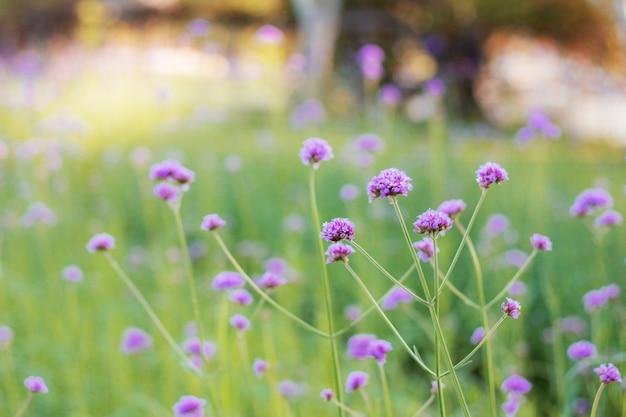 Fiore viola con bella