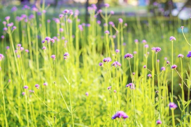 Fiore viola sulla piantagione.