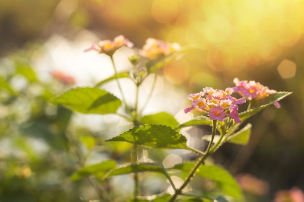Fiori belli con la luce del sole con sfocatura dello sfondo