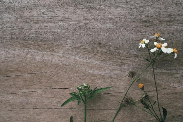 Fiori bianchi dell'erba con legno marrone.