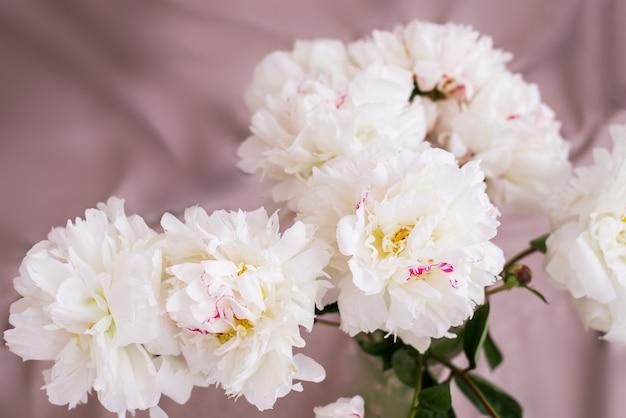 Fiori bianchi di peonia
