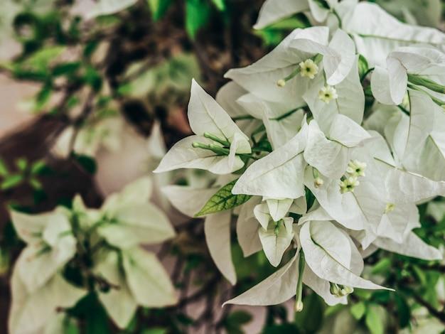 Fiori bianchi. sfondo della natura
