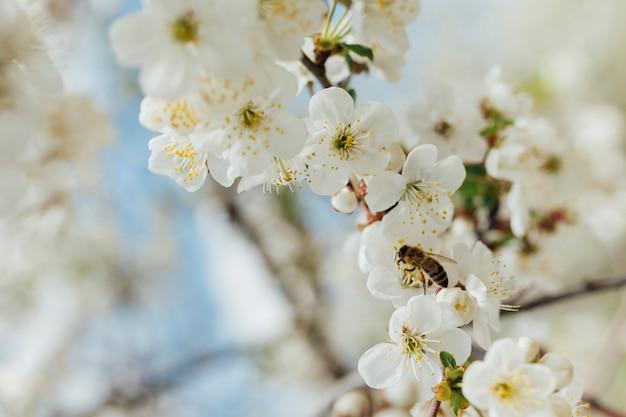 Fiori bianchi su un ramo