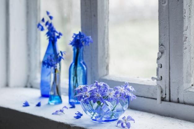 Fiori blu della molla sul davanzale