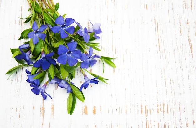 Fiori blu perwinkle