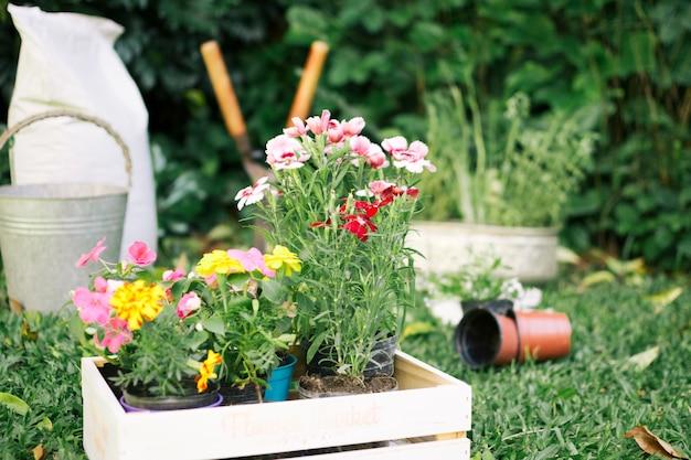 Fiori che crescono in scatole di legno sull'iarda del giardino