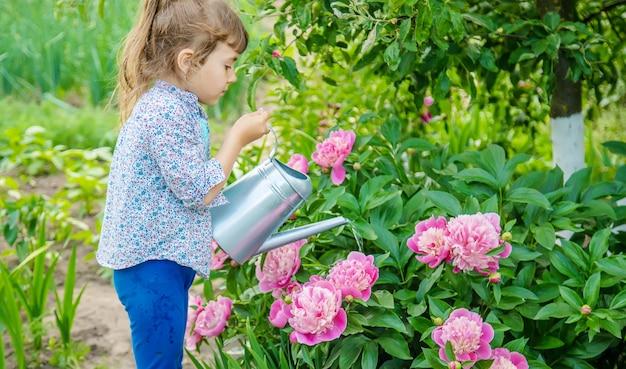 Fiori d'innaffiatura del bambino nel giardino.