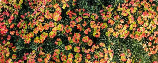 Fiori decorativi del cespuglio di un fondo floreale di festa del primo piano della pianta verde per un fiorista
