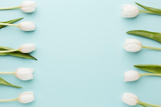 Fiori del tulipano con la vista superiore di disposizione delle foglie