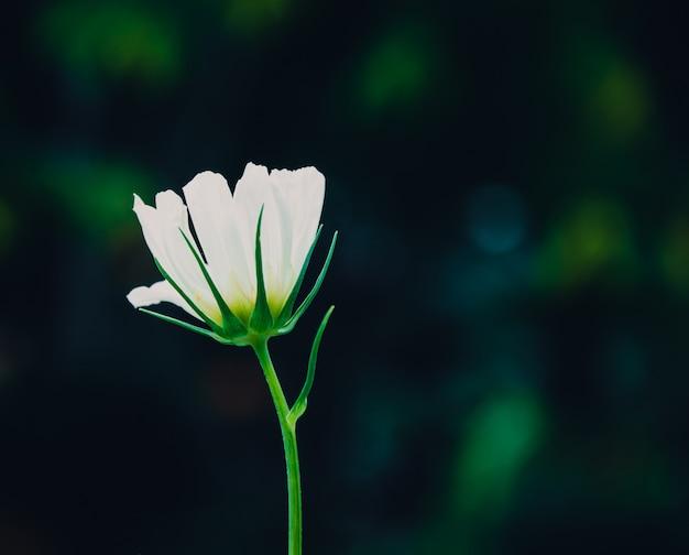 Fiori dell'universo nel giardino, filtro dai toni vintage