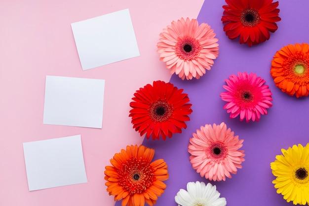Fiori della gerbera con le carte bianche dello spazio della copia