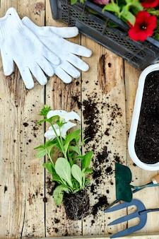 Fiori della petunia e strumenti di giardinaggio su fondo di legno.