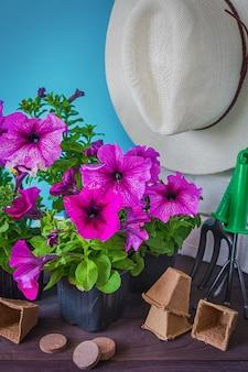 Fiori della petunia, strumenti di giardino e un cappello di paglia sull'erba nel giardino contro un cielo blu con lo spazio della copia